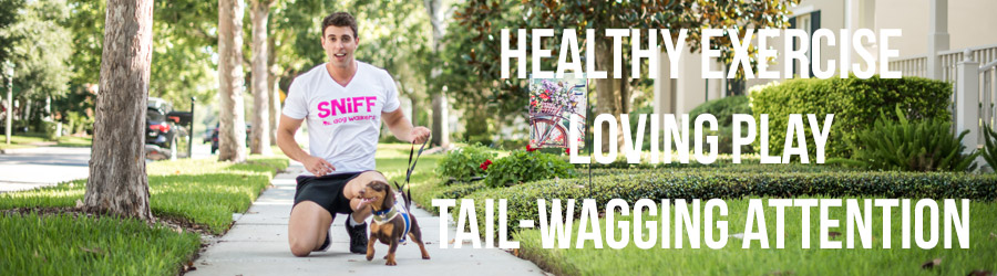 Healthy Exercise Loving Play Tail-Wagging Attention