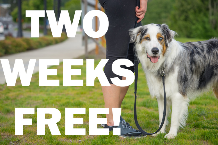 Two Weeks Free From SNIFF Orlando Dog Walkers